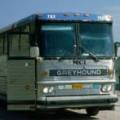 Greyhound Autobus